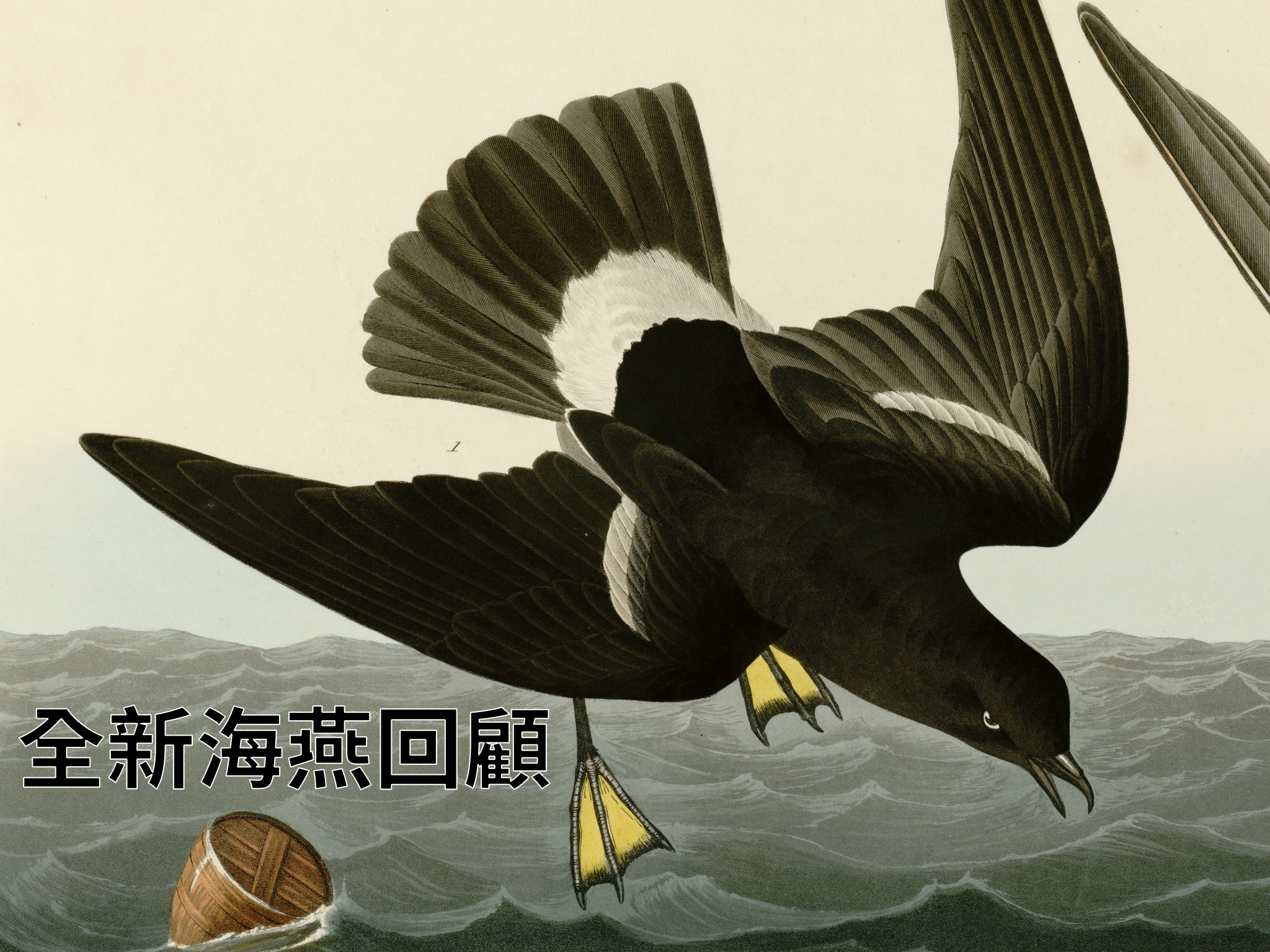 Stormy Petrel cover.jpg